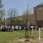 入学生と共に成長「ユリノキを植樹」