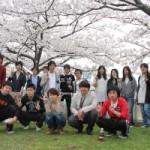 桜の下で楽しむお花見ランチ