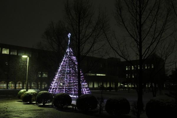 ピンクの光のクリスマスツリー(正面入口側)