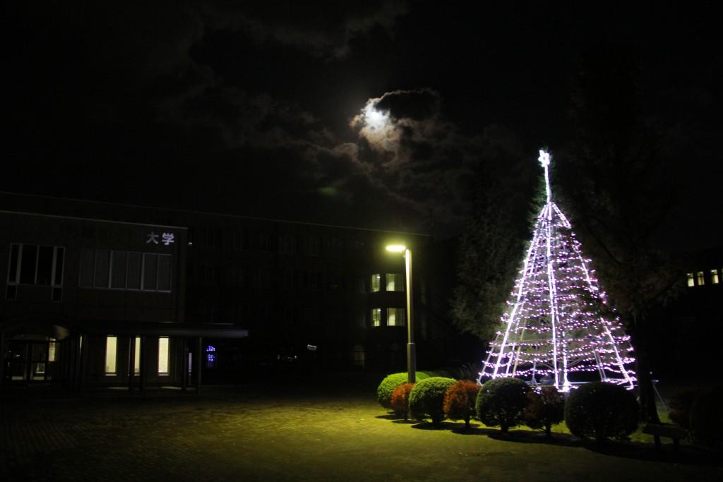 大学正面前のクリスマスツリー(ピンク)