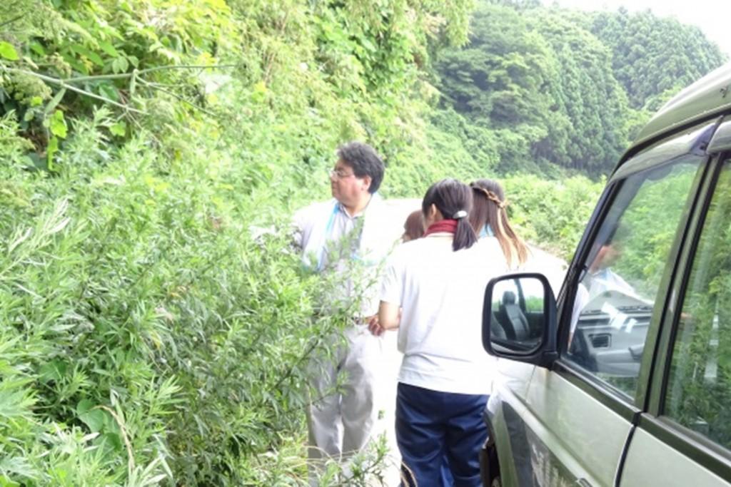お茶の材料となるアマドコロの植生調査を村長と共に行いました