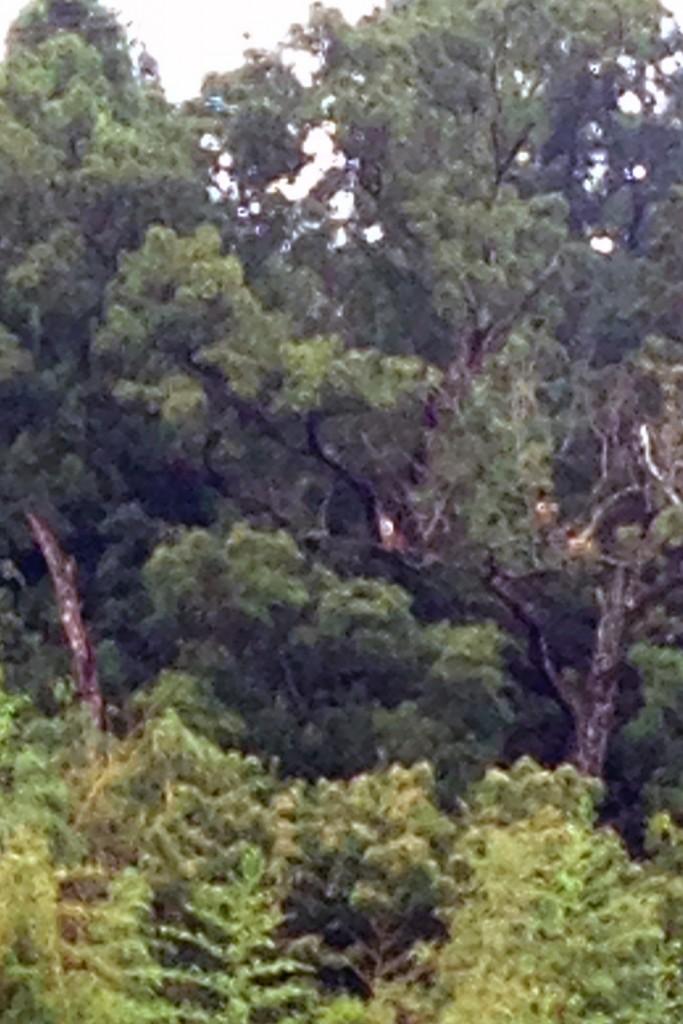 写真中央付近にいる朱鷺の様子をそっと見守りました