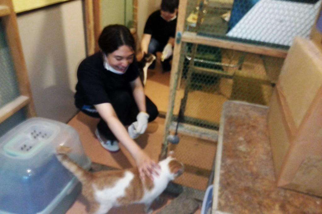 志田さんは、猫の部屋の掃除を担当しました