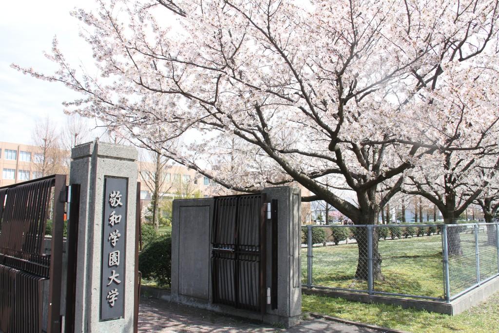満開となった、敬和学園大学の桜