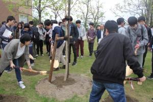 学生・教職員でユリノキの土入れをしました