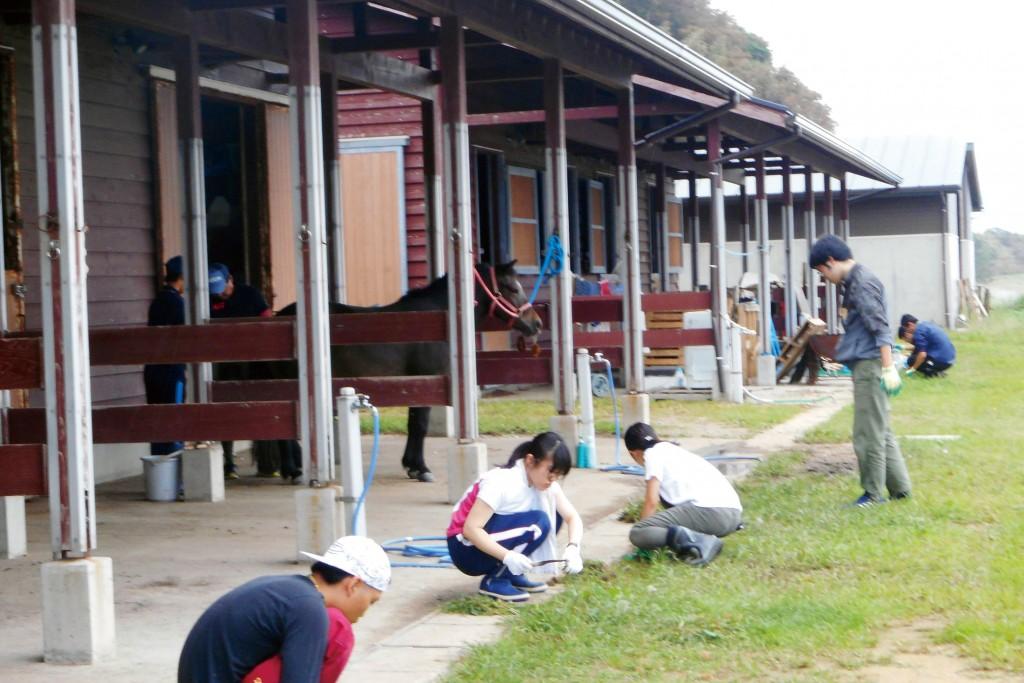 「粟島プロジェクト」では、あわしま牧場での馬の多様な利活用の推進、地域活性化の手法を学びました