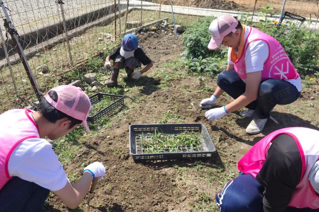被災地域につくった花畑の維持作業(草抜き)をしました