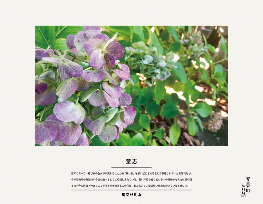 23 意志(川又ゼミA)