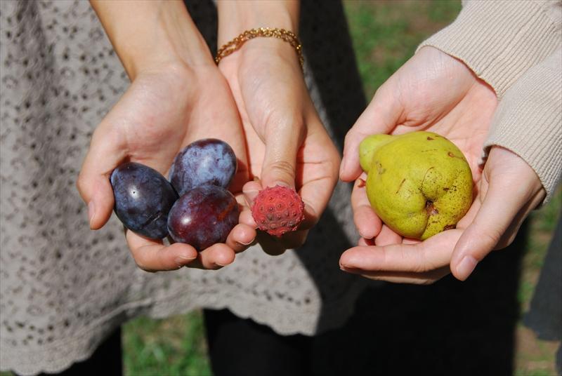 キャンパス内での秋の収穫!