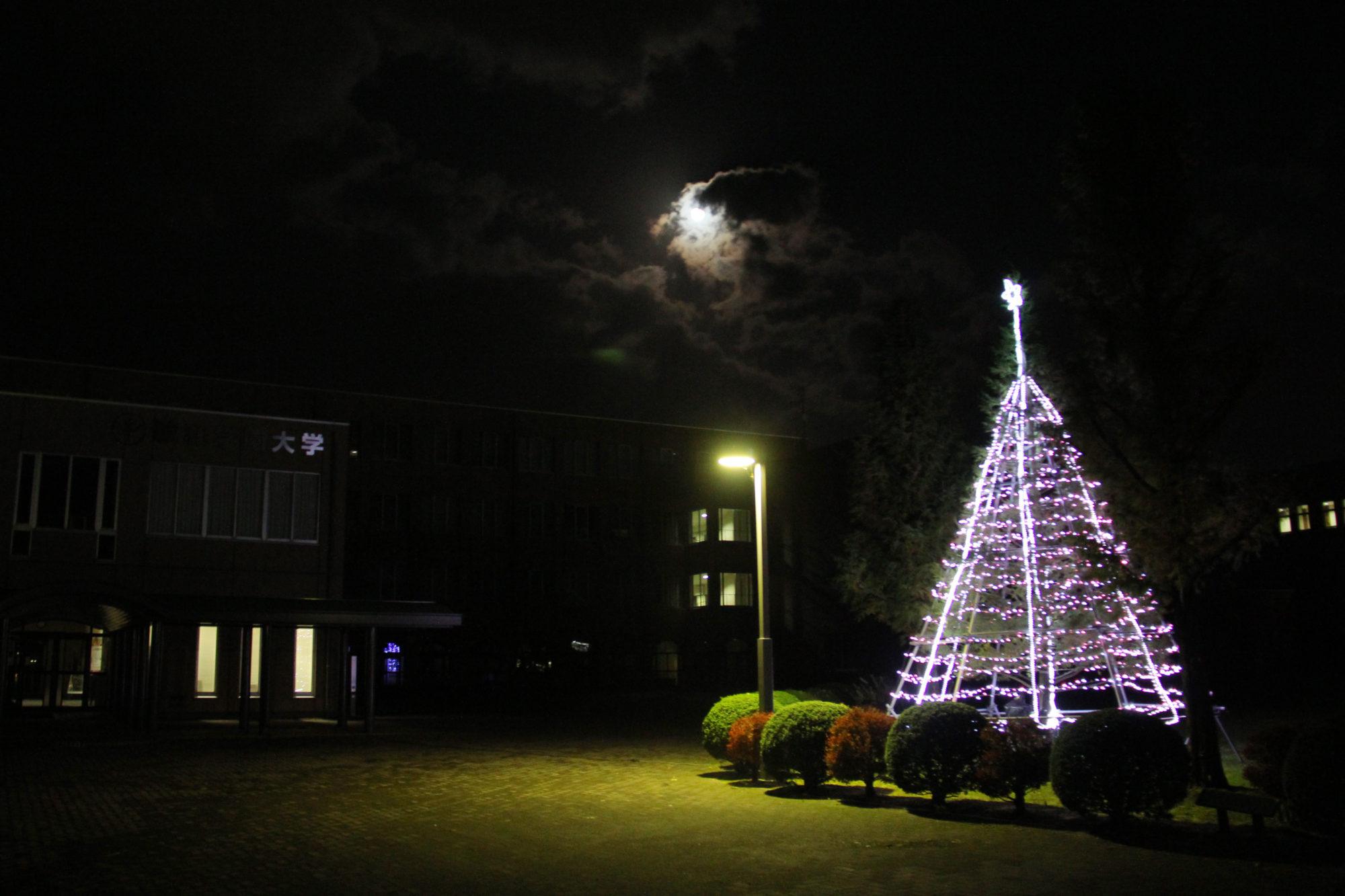 希望の光、クリスマスツリーが点灯されました