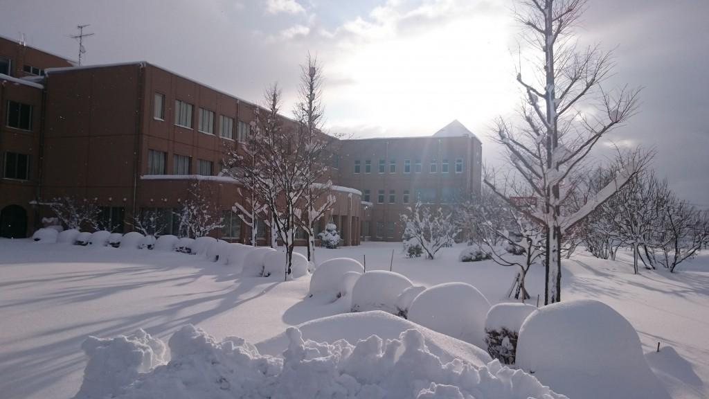 久しぶりの大雪になりました